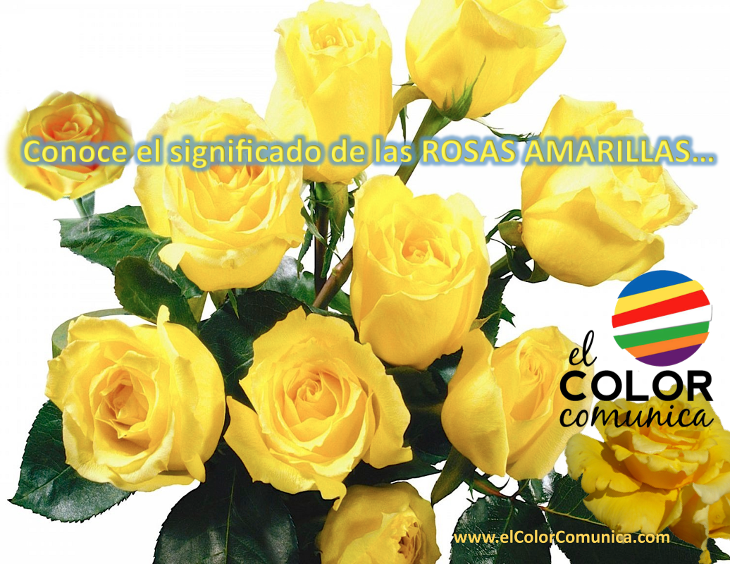 El Color Comunica Significado De Las Rosas Amarillas At Elcolorcomunica