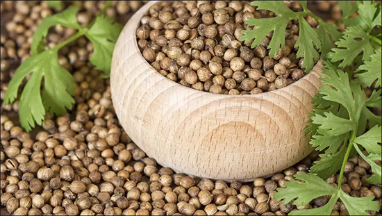 coriander, ayurvedic properties, health benefits, medicinal uses, dosage