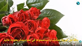 مجموعة من صور الورود، عالية الجودة للتحميل. الرابط في الوصف