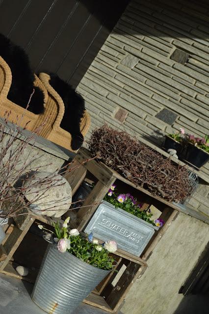 Ideer til vårblomstring i krukker - i fargene rosa/lilla - Stilleben med kvistring, stemor, ranunkler m.m.