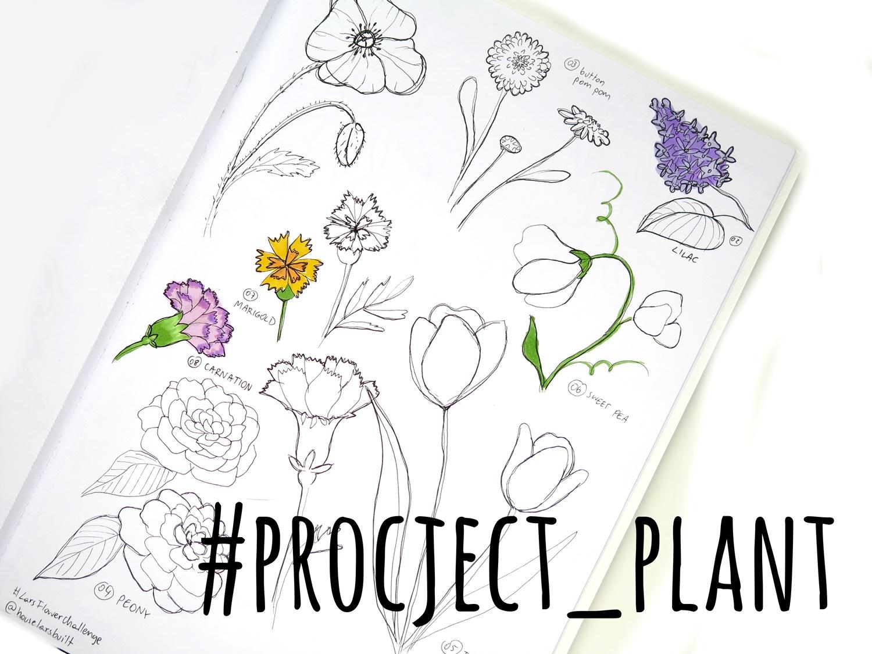 Uczę się malować rośliny – wyzwanie #project_plant część 2/2