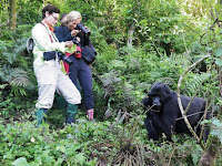 Experience Uganda Gorilla Trekking