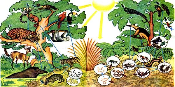 факт:лес амазонки приют для многих животных