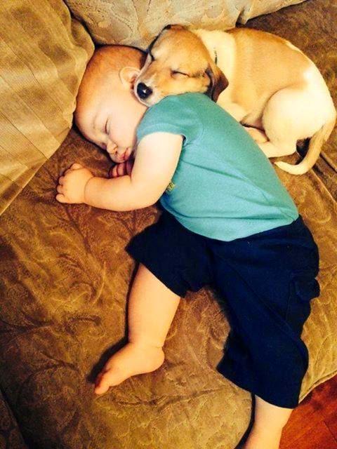 lustiges Bild: Kind mit Hund schläft