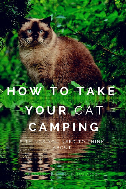 Camping with cats - can you do it?