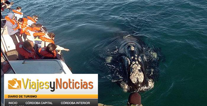 Avistaje de ballenas viajes y noticias con ballenas en peninsula valdes