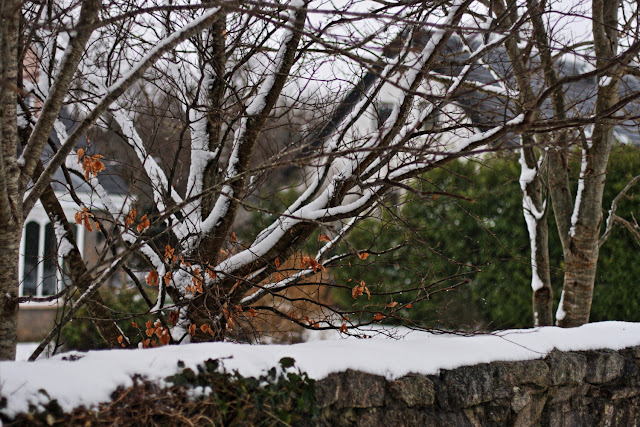 stone wall, tree covered with snow