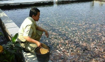 ciri ciri benih ikan berkualitas