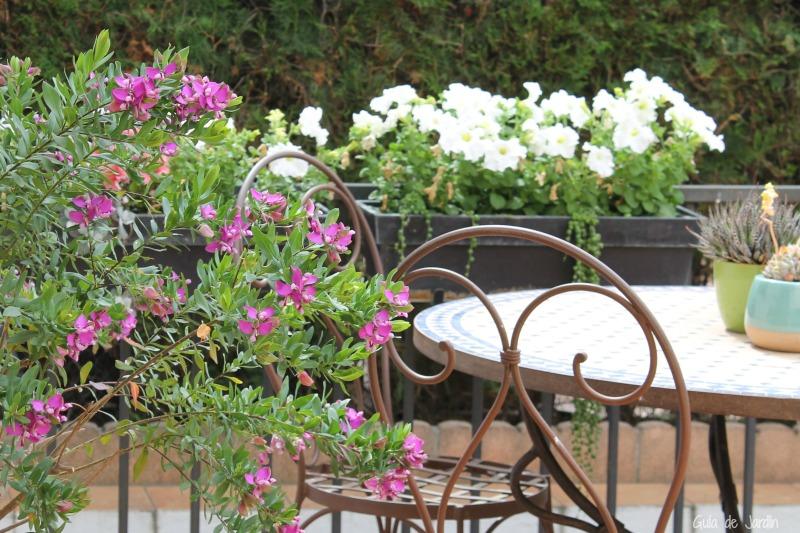 Poligala y petunias blancas en la jardinera