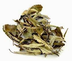Yerba santa dried leaves
