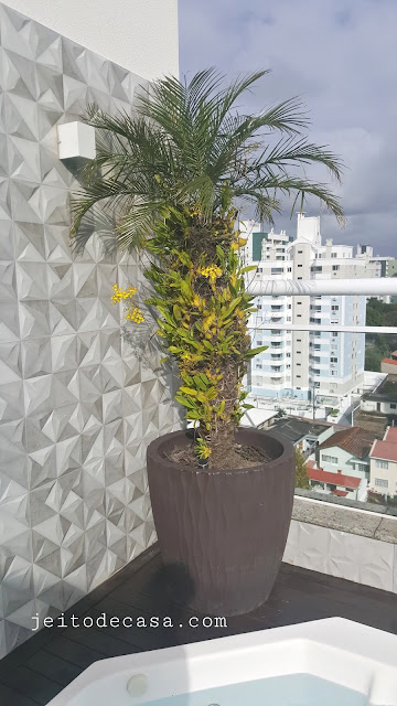 orquidea-na-palmeira-fenix