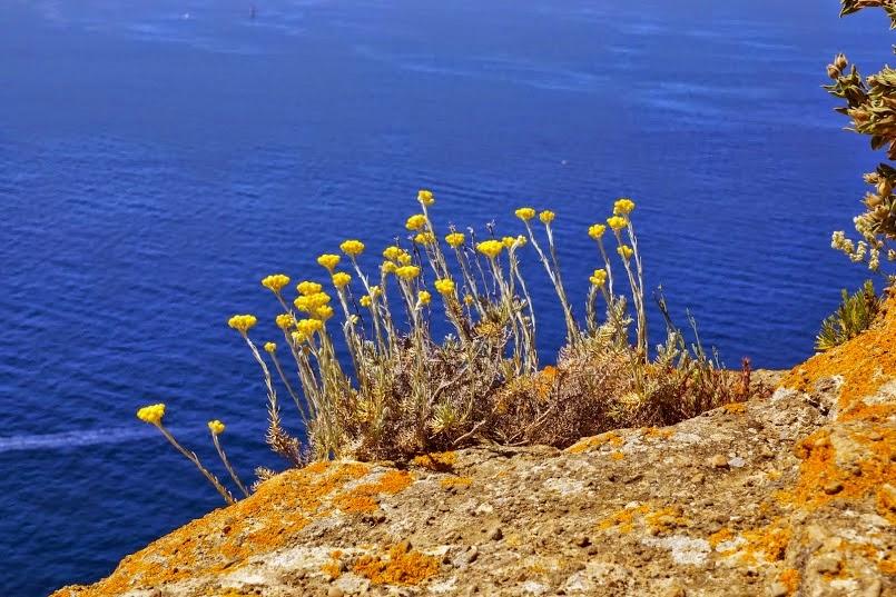 http://www.randonnees-calanques.fr/p/randonnee-initiation-la-botanique-dans.html