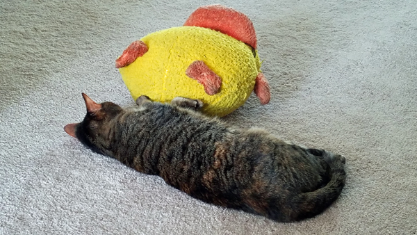 image of Sophie the Torbie Cat lying on the floor with one paw on a giant plush duck