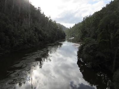 Bosques cercanos a Cradle Mountain, Tasmania