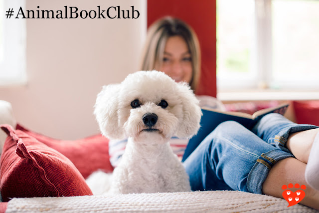 In May, the Companion Animal Psychology Book Club is reading From Fearful to Fear Free™. This little white dog looks at the camera while his owner reads a book.