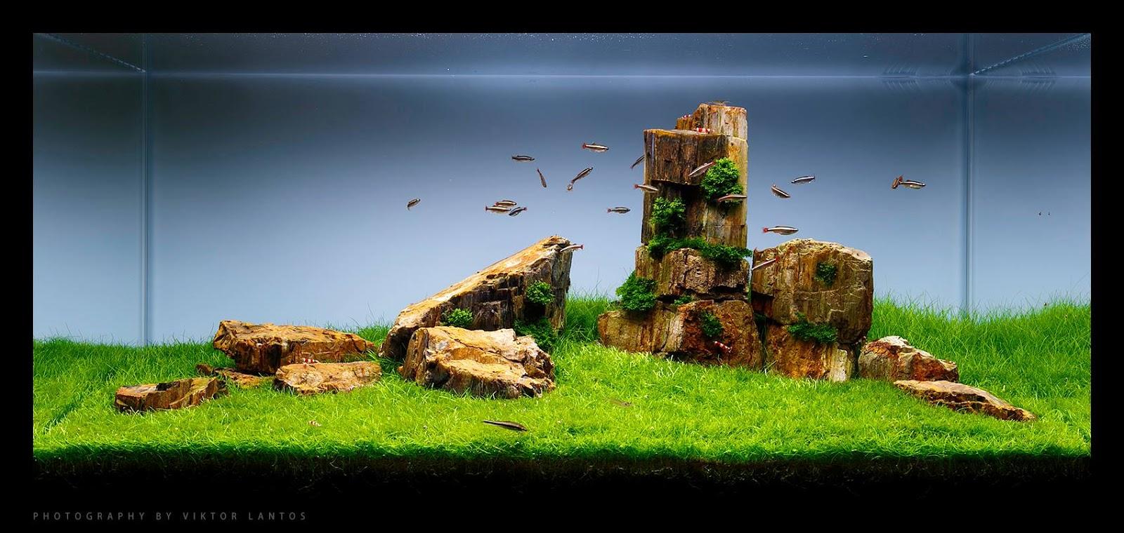 Một hồ thủy sinh dùng đá gỗ hóa thạch ấn tượng
