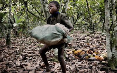 Criança carrega um saco pesado de cacau