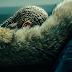 """Stream: atualizado! Assista ao especial """"Lemonade"""", da Beyoncé, ao vivo pela internet"""