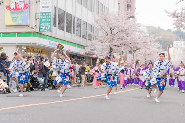 せいせき桜まつり、満開の桜の下で踊るひょっとこ連の男踊りの写真