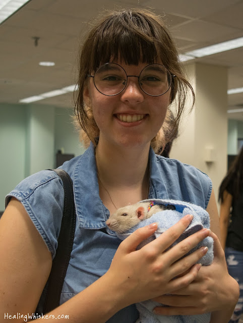 Oliver the therapy rat