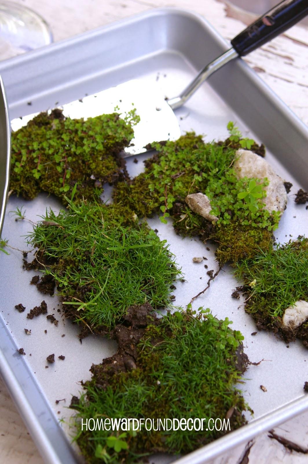 How To Make A Free Moss Terrarium Homewardfound Decor