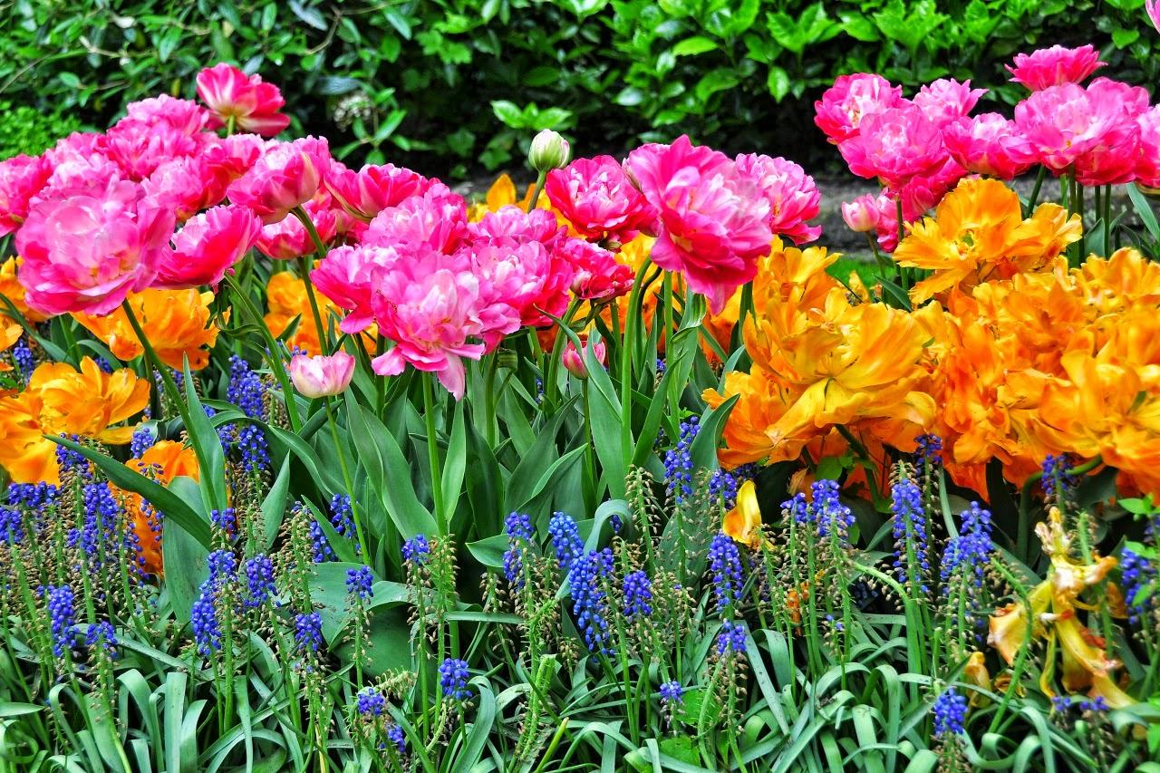 Imagens De Flores Para Whatsapp