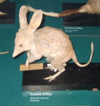Recently Extinct Animals