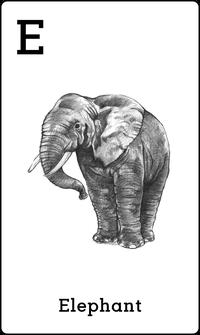 Hewan Gajah dalam Kartu Animal 4D+