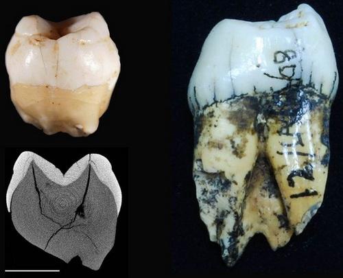 Laporan Penelitian Manusia Tiba di Sumatera Lebih Dari 60.000 Tahun Lalu