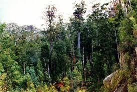 Rising Forest Density