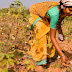 Indian Government & Farmers Ditch GMO Crops - Monsanto Hemorrhaging TENS OF MILLIONS