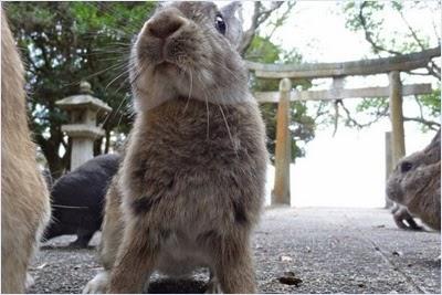 เกาะกระต่าย (Rabbit Island)