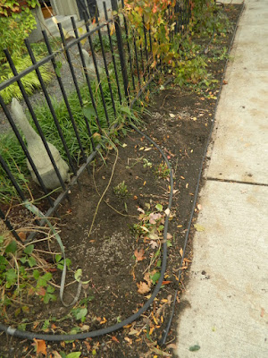 Toronto Cabbagetown Front Yard Fall Cleanup after by Paul Jung Gardening Services