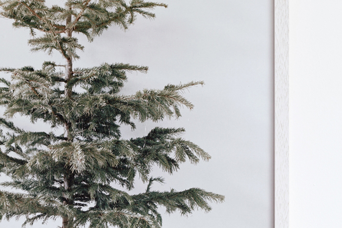 christmas tree poster bastisrike photoghtaphy studiooink
