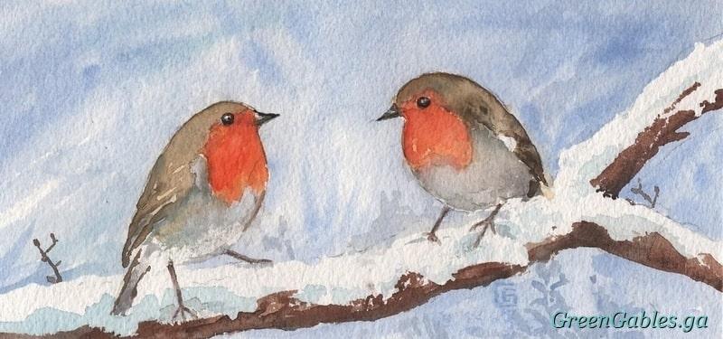 Robin Birds in Winter