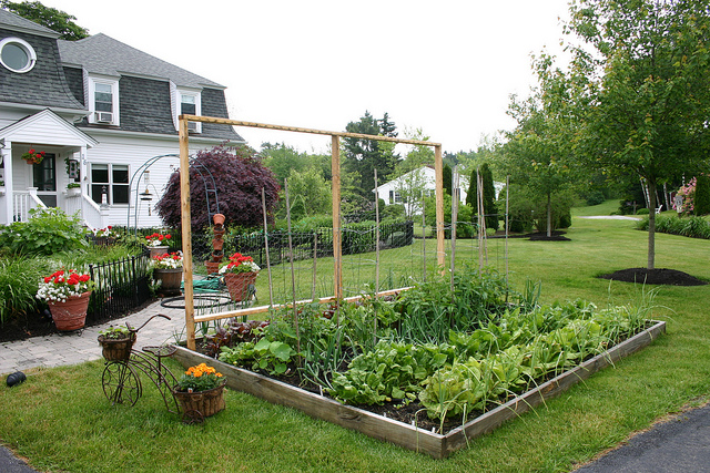 Proverbs 31 woman pros and cons of rasied bed and in the ground vegetable gardens - Front yard vegetable garden ideas ...