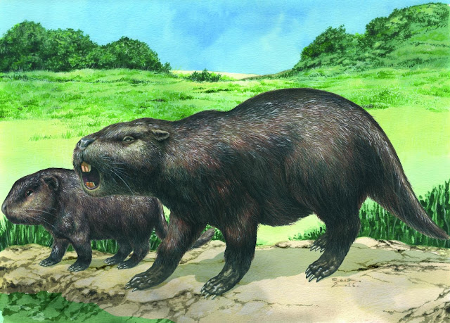 Rare fossils of giant rodents found in Uruguay raise questions