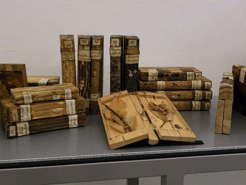 Xiloteca: la biblioteca de madera