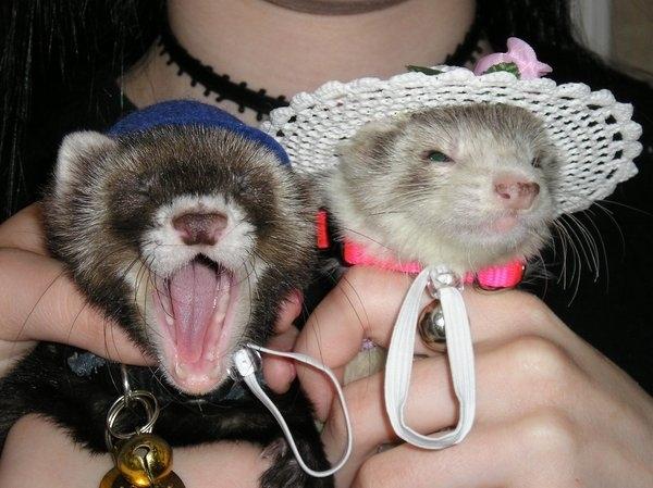 Photos Of Animals Wearing Hats Maret 2014  Lowongan Kerja