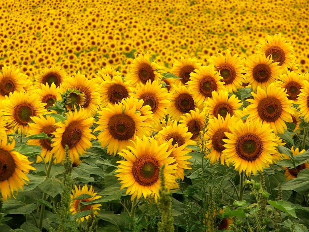 Cosas Para Photoscape Flores Y Plantas Arboles Ps: Siete Temas Diversos Para Ocho Microrrelatos Geniales