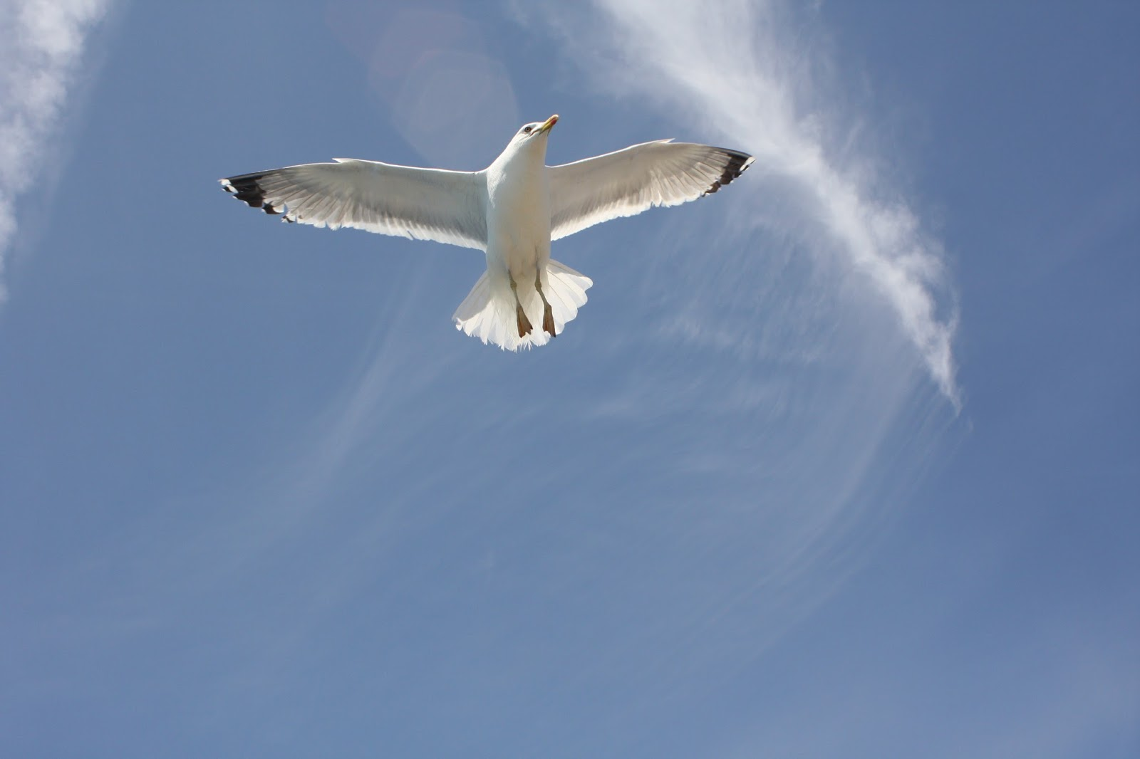 A picture of a bird flying at high attitude.