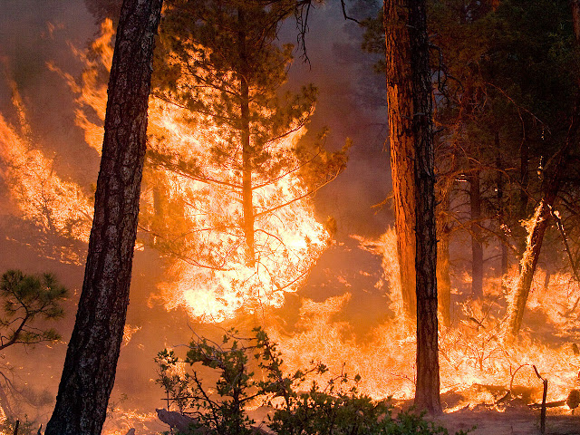 Wildfires pollute much more than previously thought