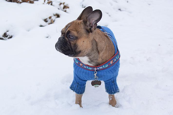 Stinky G Wintermantel für Französische Bulldoggen
