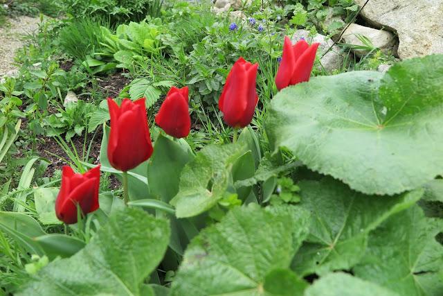 april%2BGarten%2B026 - Garten Aurikel