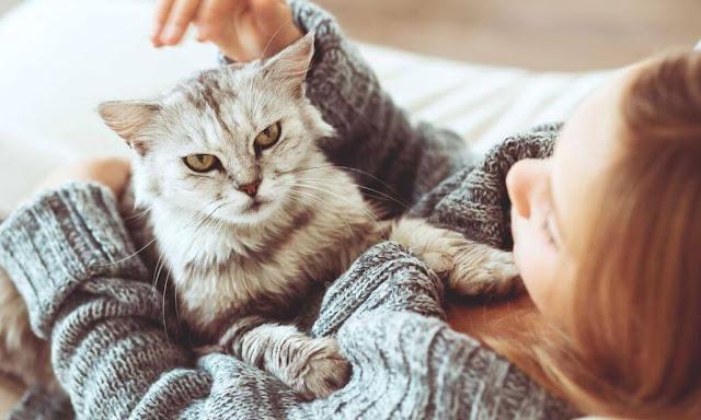 خمس 5 نصائح للحفاظ على صحتك والوقاية من الامراض المعدية عند تربية الحيوانات الاليفه فى منزلك