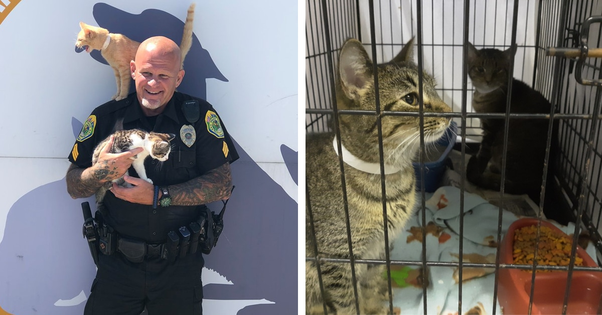 Police Department Allows People To Pay Their Parking Tickets With Donations For Shelter Cats