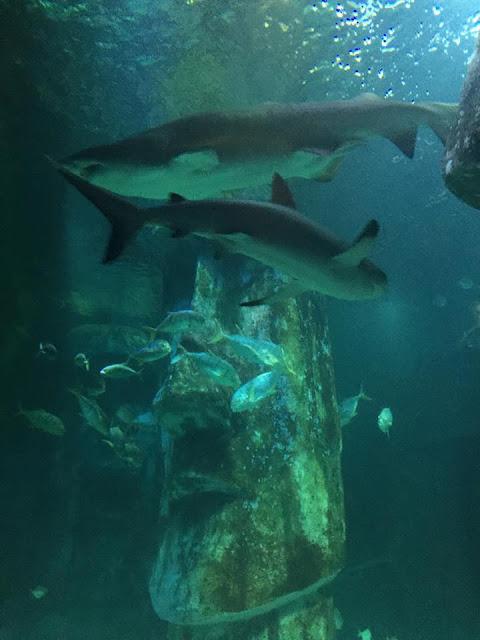 Visite de l'aquarium de Londres