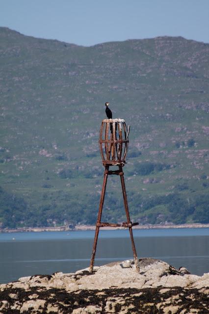 Plockton-uccello