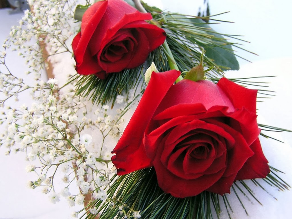 Free Wallpapers Red Rose Love Single 2014http://my143rose
