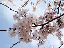 36bdfa7531 Ikebana  el Arte Floral Japonés